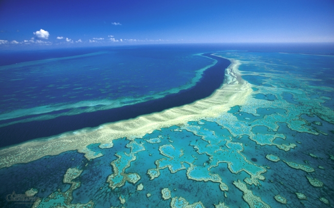 httpswww-theodysseyonline-comkilling-great-barrier-reef